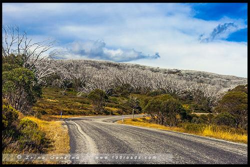 Bogong High Plains, Фолс Крик, Falls Creek, Викторианские Альпы, Victorian Alps, Австралия, Australia