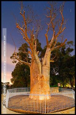 Ботанический Сад, Botanic Garden, Королевский Парк, Kings Park, Перт, Perth, Западная Австралия, Western Australia, WA, Австралия, Australia