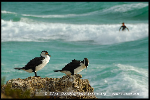 Пляж Коттесло, Cottesloe Beach, Перт, Perth, Западная Австралия, Western Australia, WA, Австралия, Australia