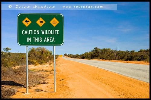 Дорога в Сервантес, Brand HWY, Западная Австралия, Western Australia, WA, Австралия, Australia