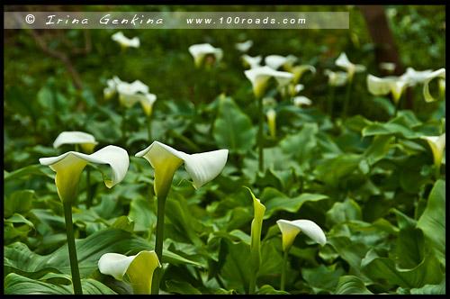 Поляны цветов недалеко от Усадьбы ручей Эллен, Ellensbrook Homestead, Западная Австралия, Western Australia, WA, Австралия, Australia