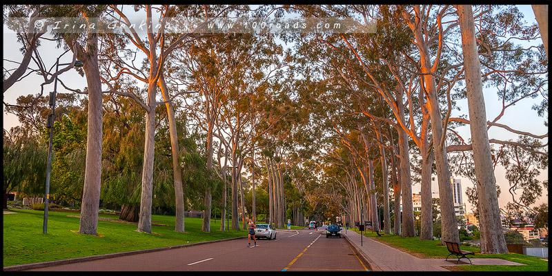 Королевский Парк, Кингс-Парк, Kings Park, Перт, Perth, Западная Австралия, Western Australia, Австралия, Australia