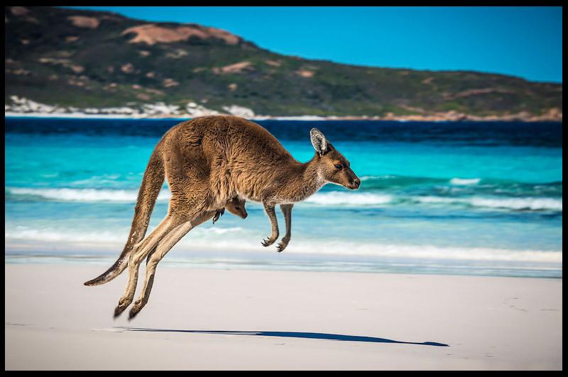 Залив Удачи, Lucky Bay, Эсперанс, Esperance, Западная Австралия, Western Australia, Австралия, Australia