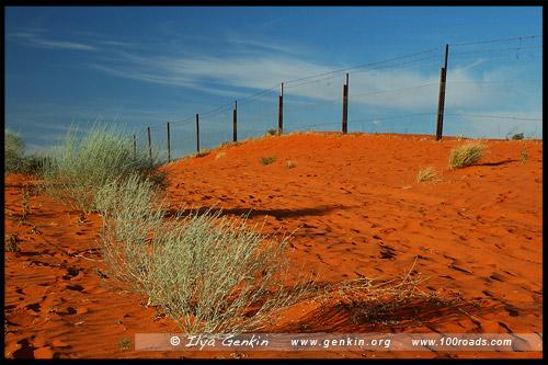 Утро в пустыне и забор от динго (Dingo Fence), Парк Стюрт, Sturt NP, Новый Южный Уэльс, NSW, Австралия, Australia