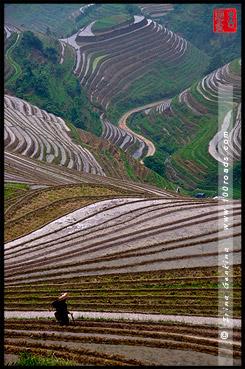 Рисовые террасы, Пинг Ан, Ping An, 平安, Лунцзи, Longji, 龙脊, Лонгшень, Longsheng, 龙胜, Китай, China, 中國, 中国