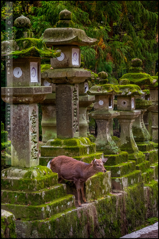 Нара, Nara, 奈良市, Хонсю, Honshu Island, 本州, Япония, Japan, 日本)