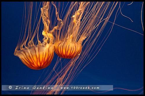 Океанариум Осака Каиюкан, Osaka Aquarium Kaiyukan, 海遊館, Осака, Osaka, 大阪, регион Кансай, 関西地方, Kansai, 関西, Хонсю, Honshu Island, 本州, Япония, Japan, 日本