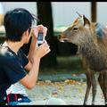 Парень и олень, Миядзима, Япония