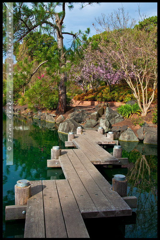 Японский сад, Ханами, Hanami, 花見, Сидней, Sydney