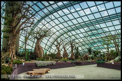 Сады у залива, Gardens by the Bay, Сингапур, Singapore