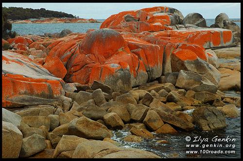 Залив Огненей, Bay of Fires, Тасмания, Tasmania, Австралия, Australia