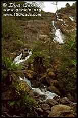 Водопад Св.Каламба, St Columba Falls, Тасмания, Tasmania, Австралия, Australia