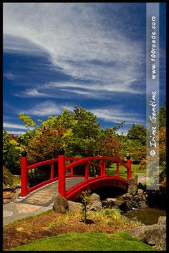 Китайский сад в Королевском Ботаническом саду, Хобарт, Hobart, Тасмания, Tasmania, Австралия, Australia