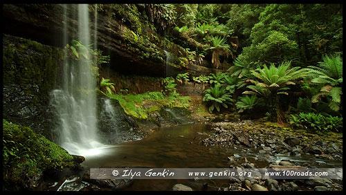Водопад Расселл, Russell Falls, Парк Маунт-Филд, Mt Field NP, Тасмания, Tasmania, Австралия, Australia