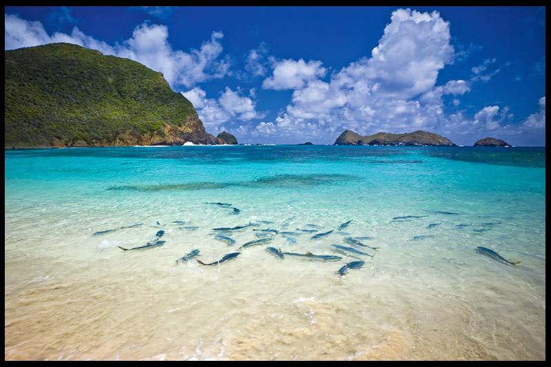Пляж Недс, Neds Beach, Остров Лорд-Хау, Lord Howe Island, Австралия, Australia