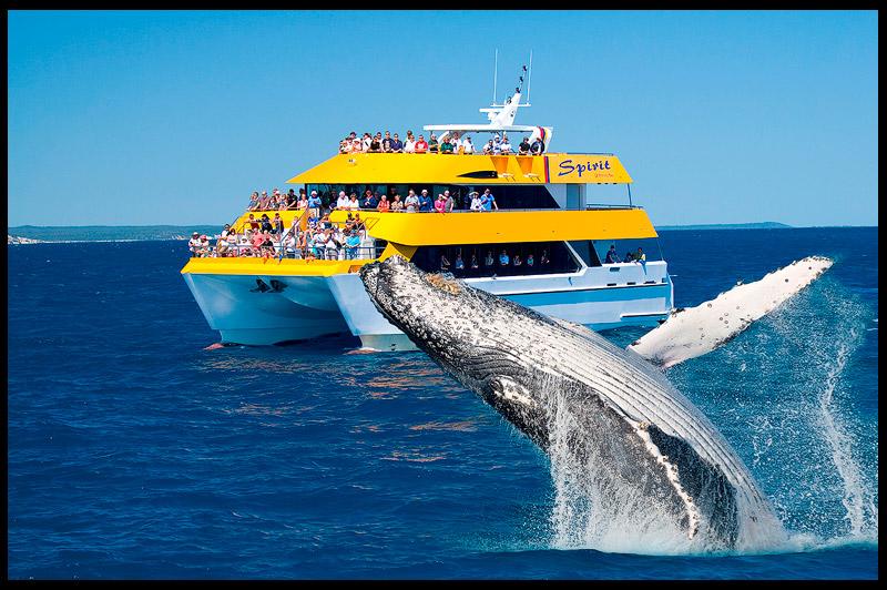 Топ-10 Австралия, Top-10 Australia, Горбатый кит, Humpback whale, Hervey Bay, Квинсленд, Queensland, Австралия, Australia