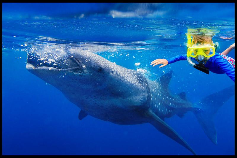Топ-10 Австралия, Top-10 Australia, Китовая акула, Whale shark, Эксмут, Exmouth, Западная Австралия, Western Australia, Австралия, Australia