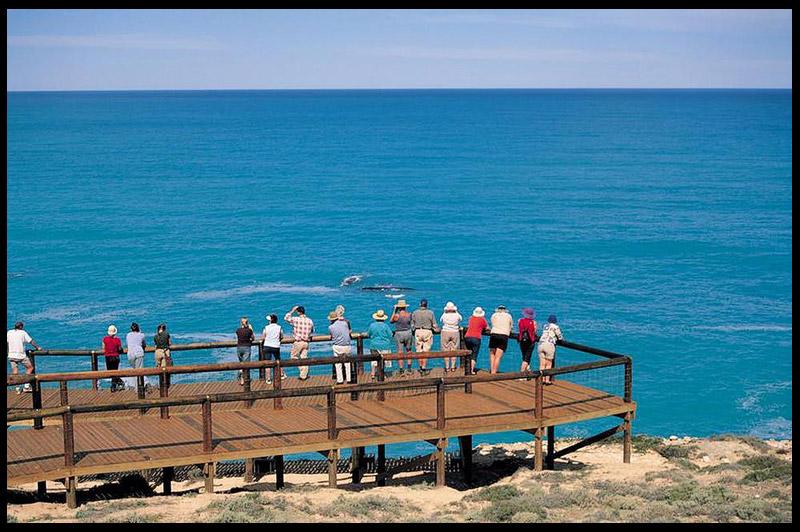Топ-10 Австралия, Top-10 Australia, Большой австралийский залив, Great Australian Bight, Южная Австралия, South Australia, Австралия, Australia