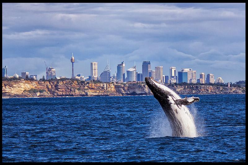 Топ-10 Австралия, Top-10 Australia, Сидней, Sydney, Новый Южный Уэльс, New South Wales, Австралия, Australia