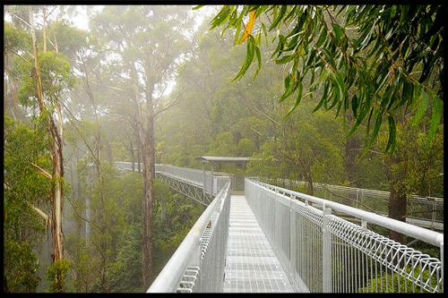 Топ-10 Австралия, Top-10 Australia, Tree Top Walks, Австралия, Australia