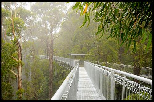 Топ-10 Австралия, Top-10 Australia, Tree Top Walks, Австралия, Australia
