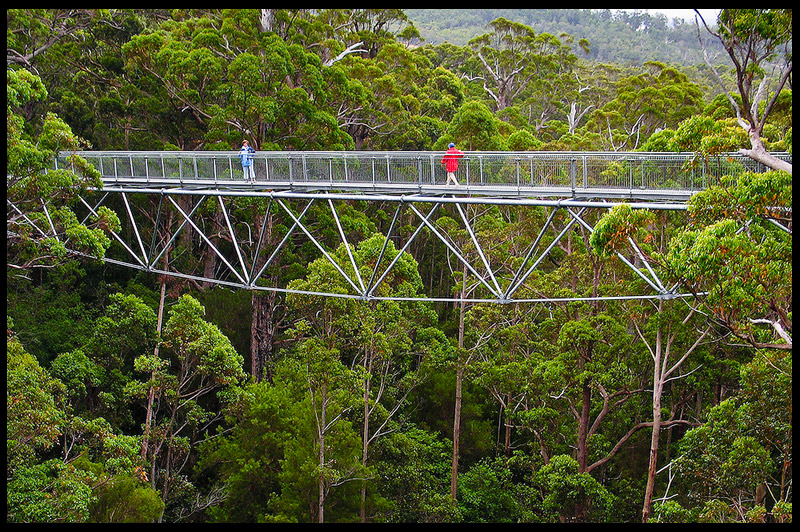 Топ-10 Австралия, Top-10 Australia, Valley of the Giants Tree Top Walk, Западная Австралия, Western Australia, Австралия, Australia