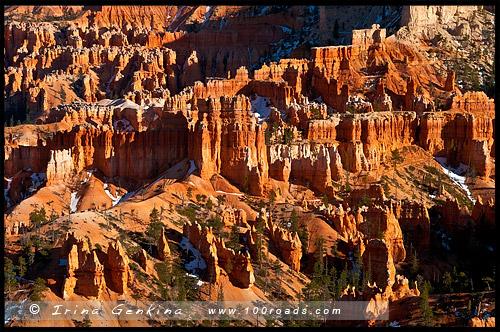Амфитеатр, Amphitheatre, Каньон Брайс, Bryce Canyon, Юта, Utah, США, USA, Америка, America