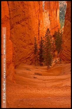 Рассвет, Круговая тропа Навахо, Navajo Loop Tril, Амфитеатр Брайс, Bryce Amphitheater, Точка Заката, Sunset Point, Каньон Брайс, Bryce Canyon, Юта, Utah, США, USA, Америка, America