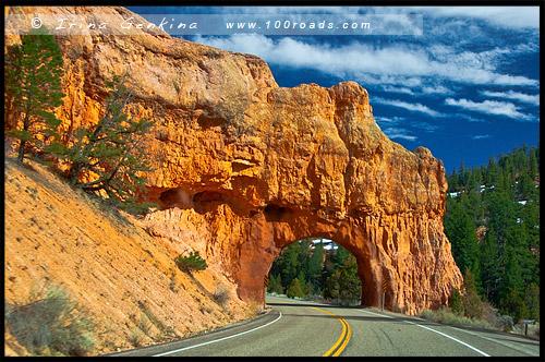Арка, Красный Каньон, Red Canyon, Юта, Utah, США, USA, Америка, America