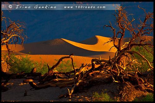 Мескитные Плоские дюны, Плоские дюны Мескит, Mesquite Flat Dunes, Долина Смерти, Death Valley, Калифорния, California, СЩА, USA, Америка, America