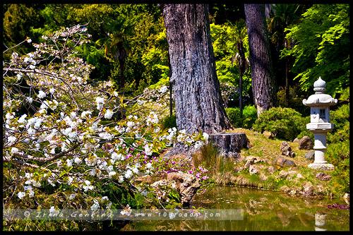 Японский чайный сад, Japanese Tea Garden, Парк Золотые Ворота, Golden Gate Park, Сан Франциско, San Francisco, Калифорния, California, СЩА, USA, Америка, America