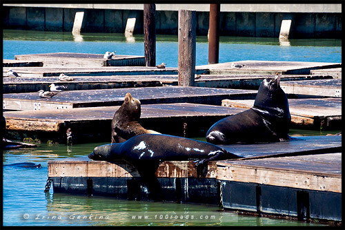 Пирс 39, Рыбацкая пристань, Fishermans Wharf, Сан Франциско, San Francisco, Калифорния, California, СЩА, USA, Америка, America