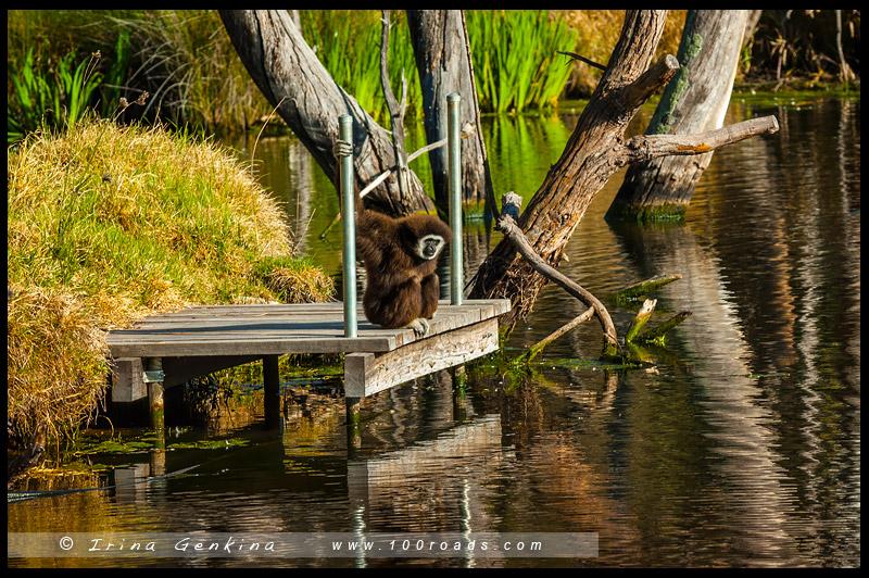 Зоопарк, Западные равнины Таронга, Taronga Western Plains Zoo, Достопримечательности, Sights, Даббо, Dubbo, Новый Южный Уэльс, New South Wales, Австралия, Australia