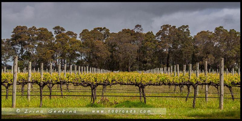 Vasse Felix, Маргарет Ривер, Margaret River, Юго-Запад, Западная Австралия, Western Australia, Австралия, Australia
